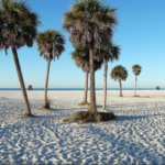 A_-_Siesta_Key_Beach_Palm_Trees_-_TEMPLATE